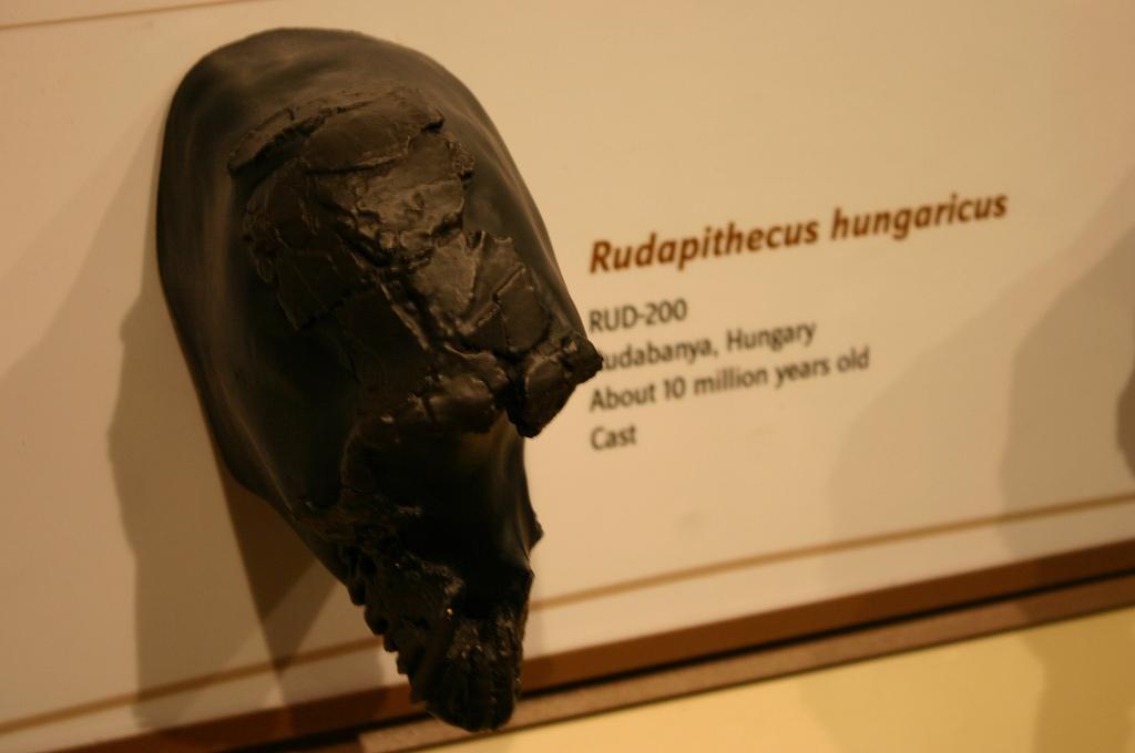 Magyar Természettudományi Múzeum – Embertani Tár