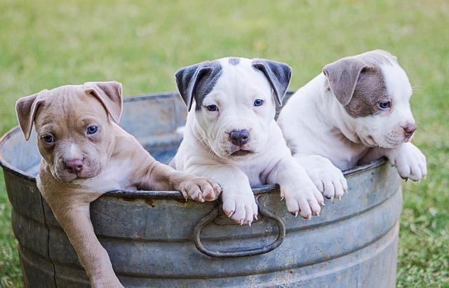 A Trovet táp a legigényesebb kutyusoknak is jó!